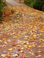 path wet