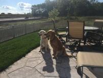 dogs patio